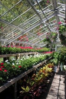 Grand Hotel's Greenhouse
