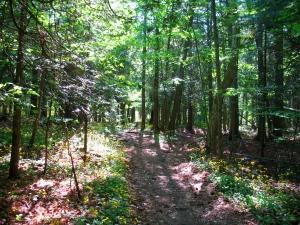 Takoda's trail