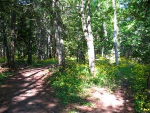 Mackinac forest floor