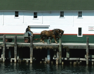 Horse drawn Wagon at Arnold Dock